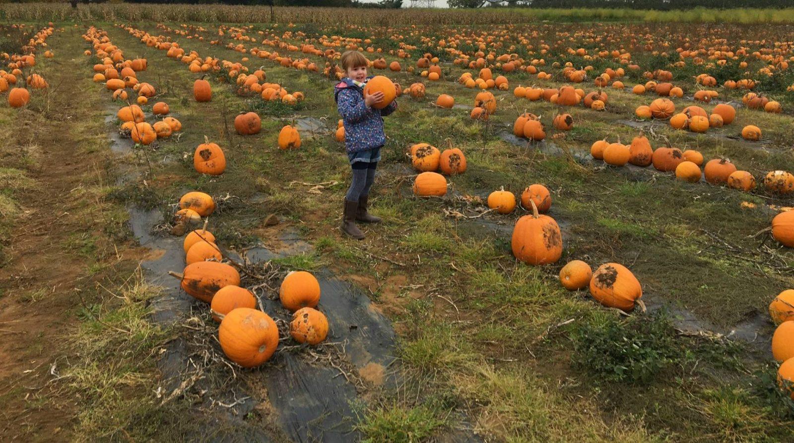 alice-holding-pumpkin
