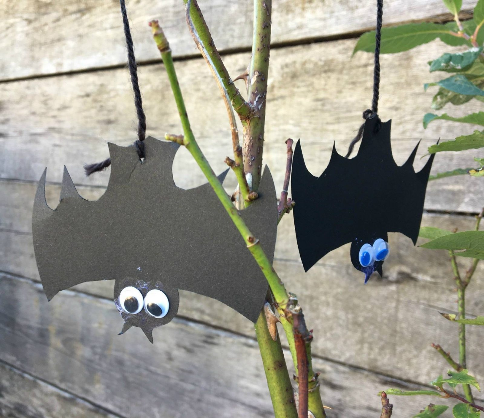 two-bats