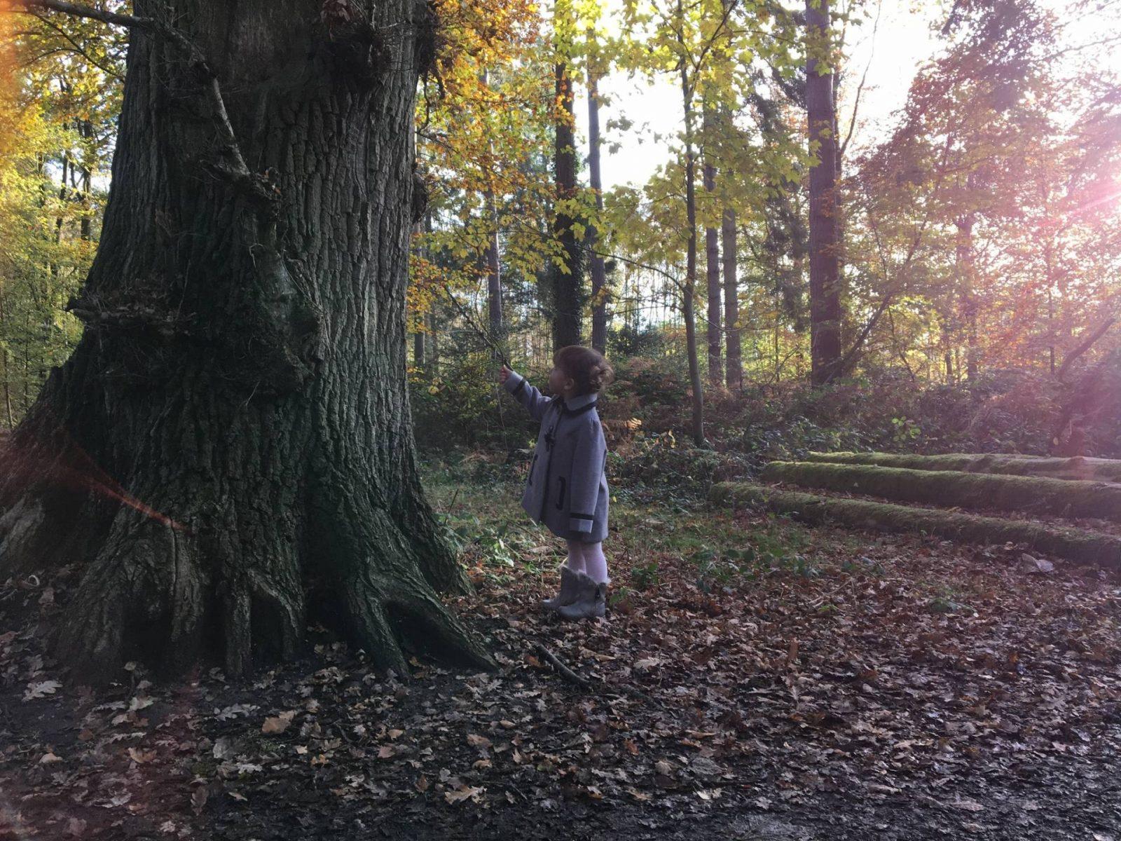 autumn-walk4