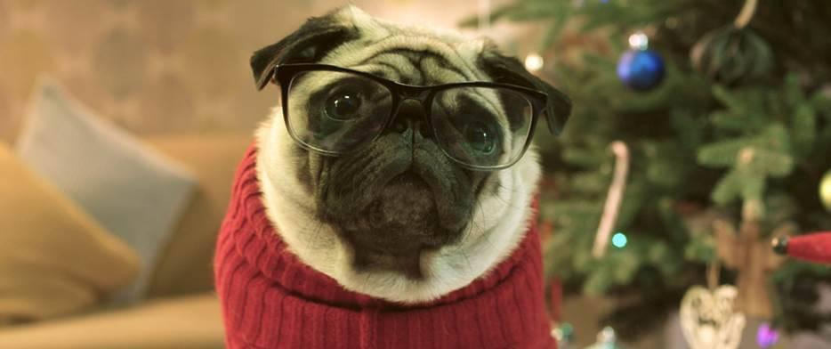 Gizmo Saves Christmas…With Vision Direct