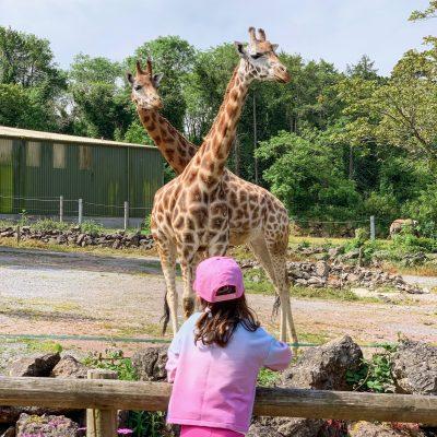 A Trip To Paignton Zoo, South Devon…